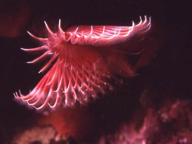 Fotografia subaquea